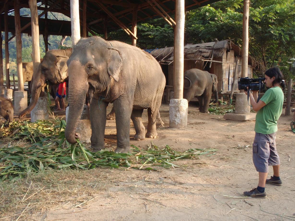 Rodrigo Saez documentalista chileno registrando a los elefantes