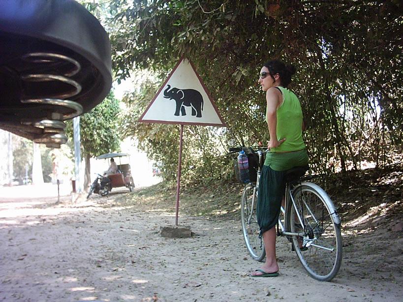 Está lleno de elefantes asiáticos en Camboya