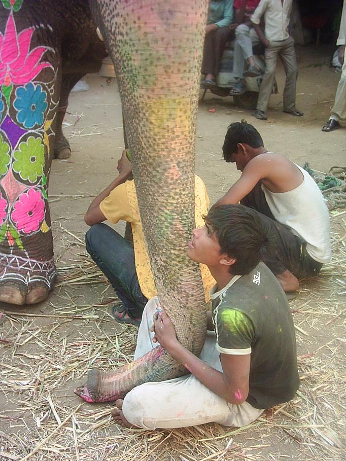 El elefante asiático es maltratado en este tipo de festivales