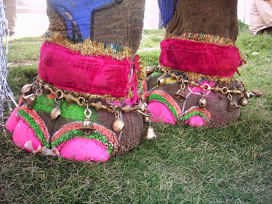 Maltrato elefantes en Festival de India, Jaipur