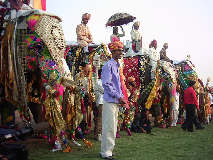 Elefantes maltratados en el Festival de los elefantes de India