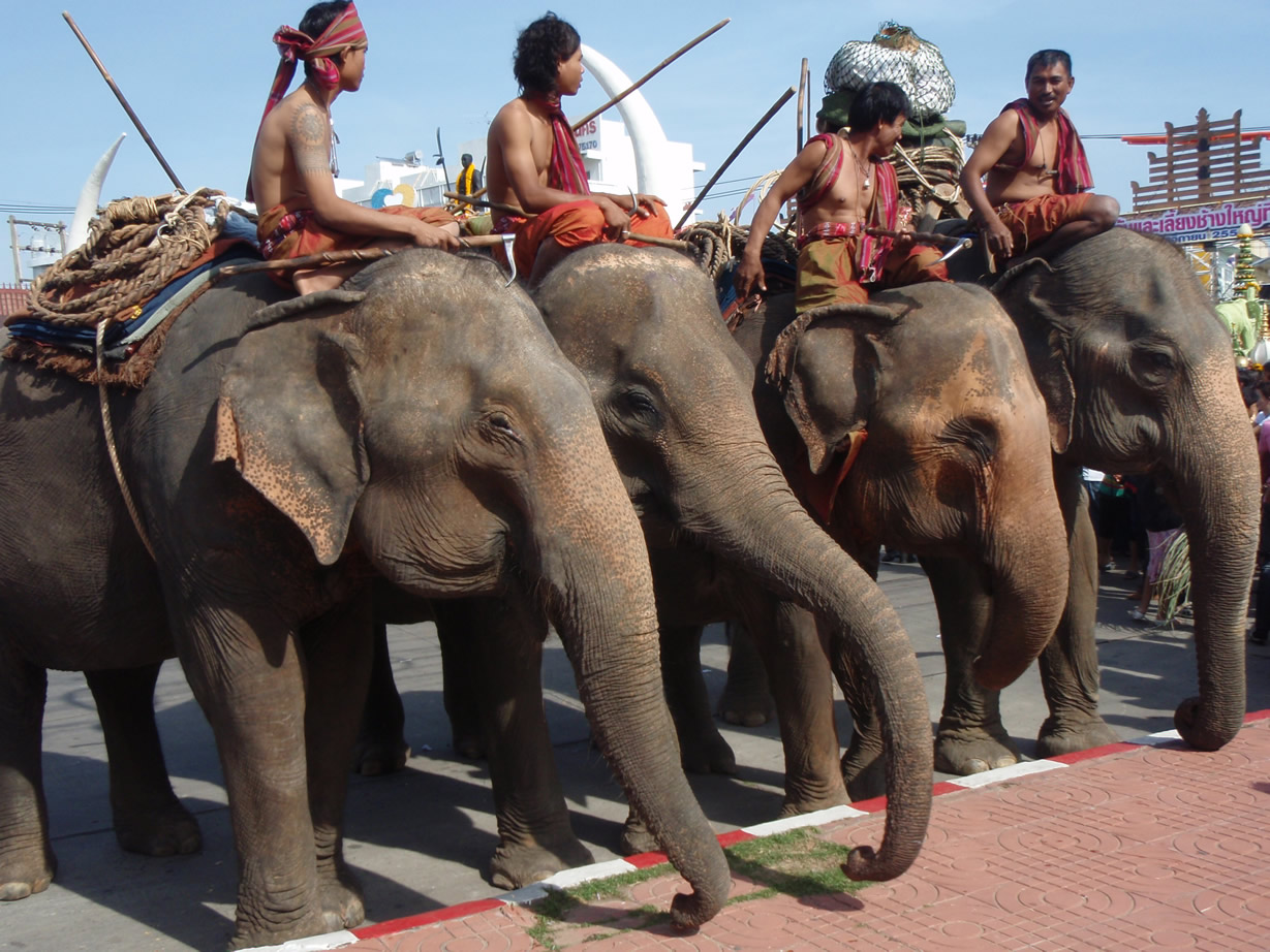 Elefantes maltratados en Surin